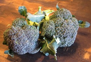 Broccoli from Salle Orchards